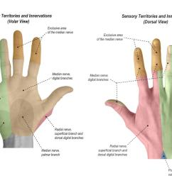 sensation sensory territories and innervations of the hand [ 1500 x 1000 Pixel ]