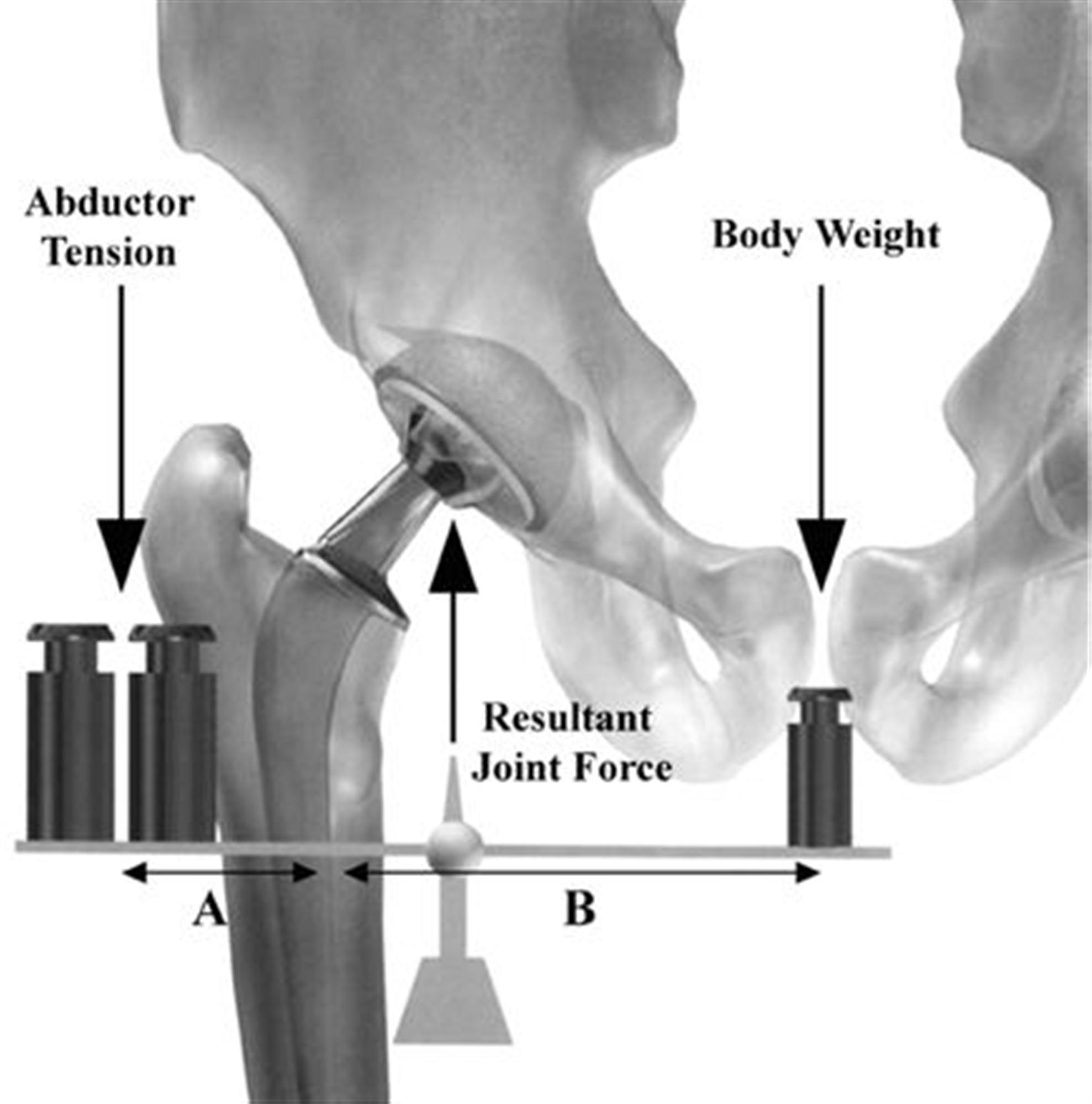 hight resolution of hip biomechanics