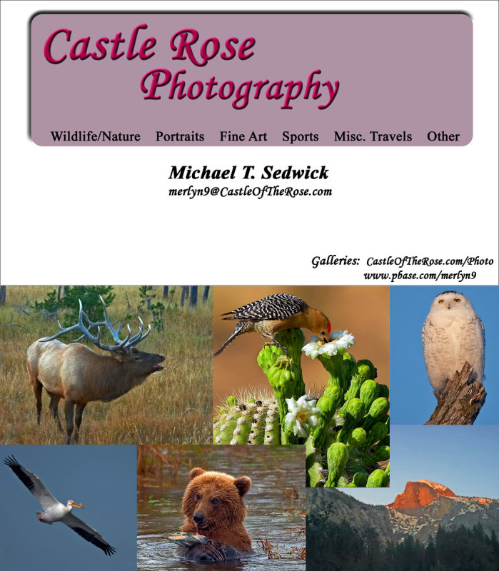 Castle Rose Photography