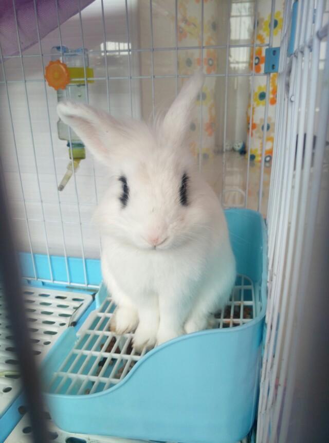 養兔子前要知道的這些,寵物店都不愿意說的-綜合