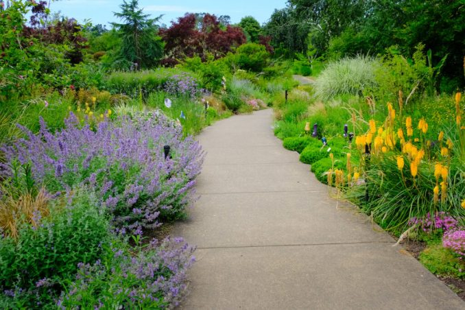 Paved pathway at the Oregon Garden.