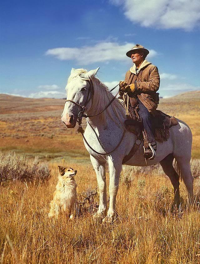 American shepherd3