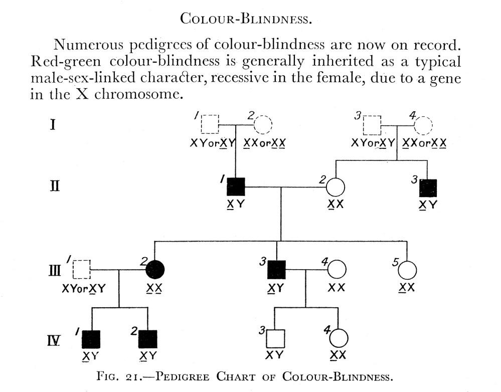 medium resolution of file charts pedigree chart of colour wellcome m0002796 jpg