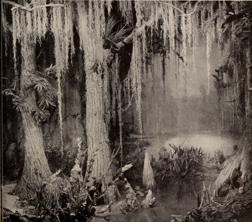 Image result for swamp monster
