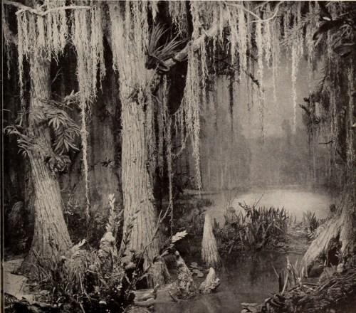 Image result for swamp monster