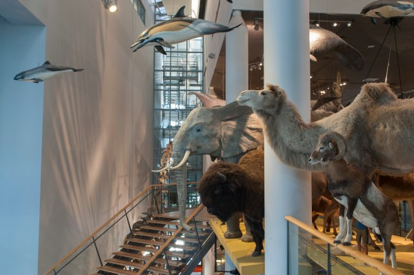 File Naturalis Biodiversity Center - Museum Exhibition