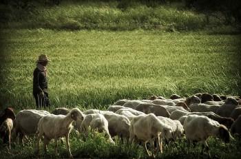 Image result for shepherd