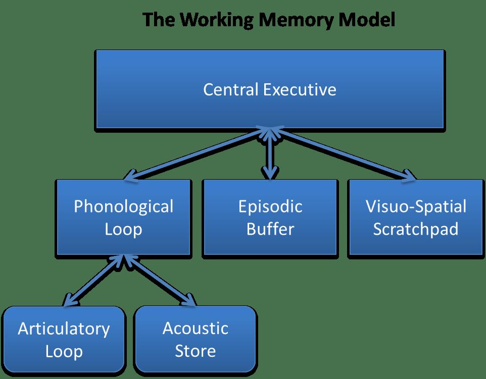 Working memory - Wikipedia