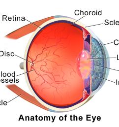 inner eye diagram label [ 1024 x 768 Pixel ]