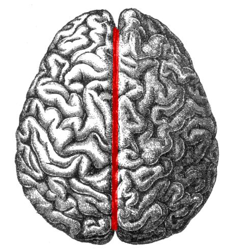 right lateral brain diagram volkswagen wiring diagrams longitudinal fissure - wikipedia