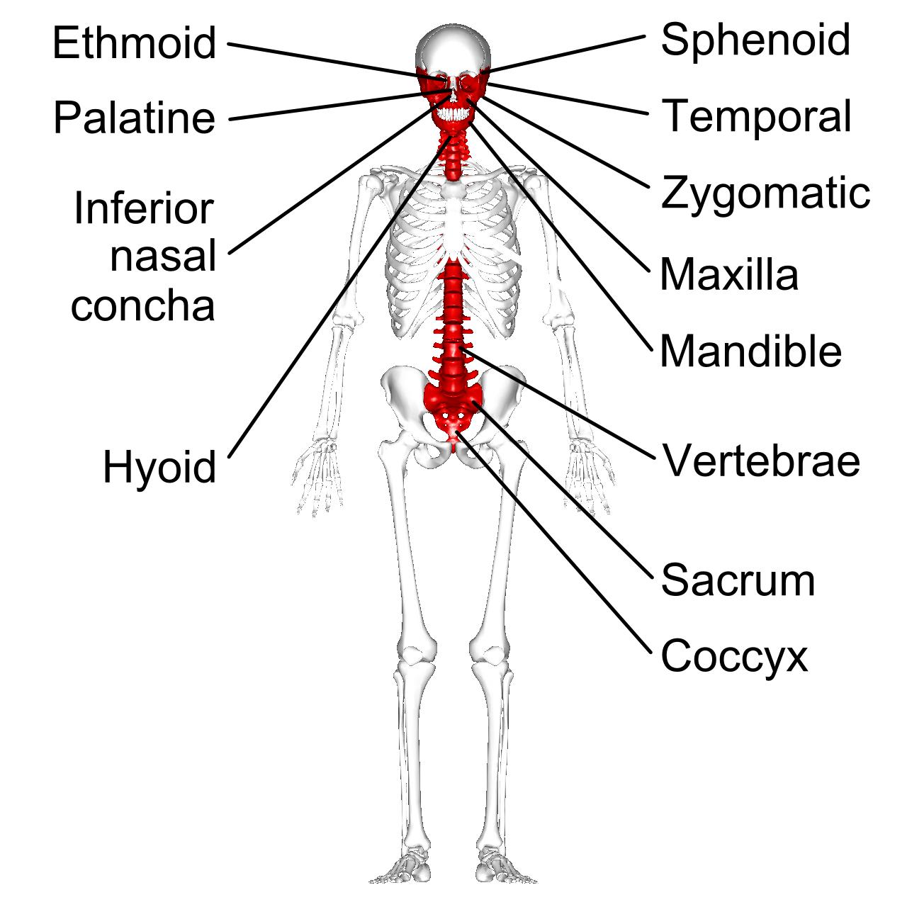 File Irregular Bones