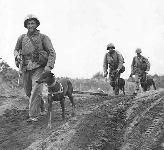 File:K-9s on Iwo Jima.jpg