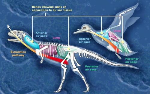 https://i0.wp.com/upload.wikimedia.org/wikipedia/commons/0/05/Dino_bird_h.jpg?resize=500%2C315&ssl=1