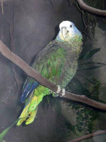 Funds For Endangered Parrots Wikipedia