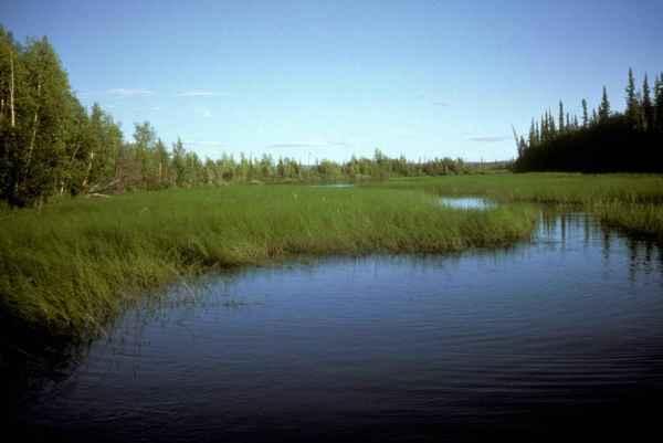 file green high swamp grass