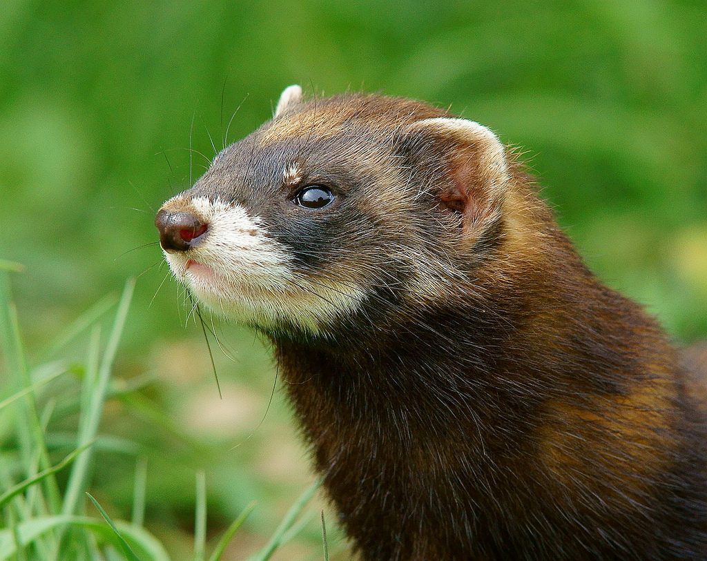 Cute Baby Pets Live Wallpaper Download Carnivorous Wild Animal Best Blog A List Of British Wild