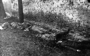 von den Freikorps-Soldaten erschossene Spartakisten
