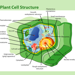 Cell Structure And Function Diagram Opel Meriva B Wiring Biology Ms Ryalls Midvale Science
