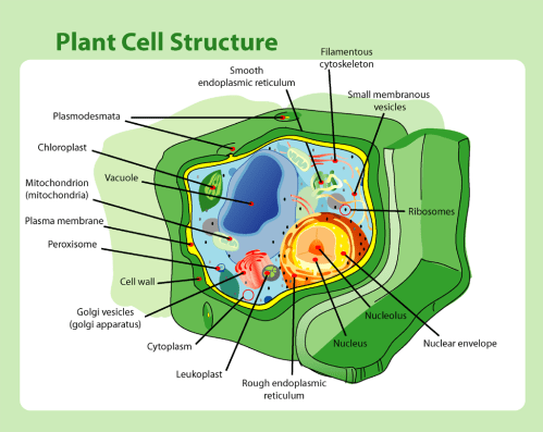 small resolution of file plant cell structure png