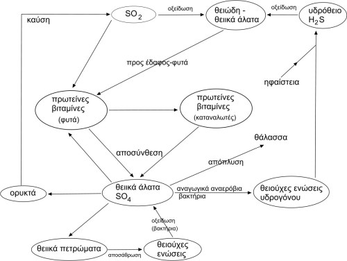 small resolution of file sulfur cycle jpg