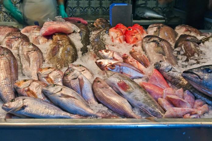 Pescados para bajar de peso