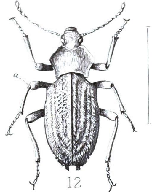 File:Hypomelus flagrans, 12, Annale van die Suid