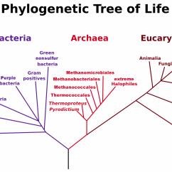 Domain Model Vs Class Diagram Stick Welder Wiring Classifying Life Bethopedia
