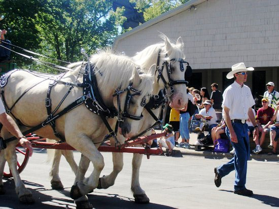 File:ACD Horses in Parade.jpg