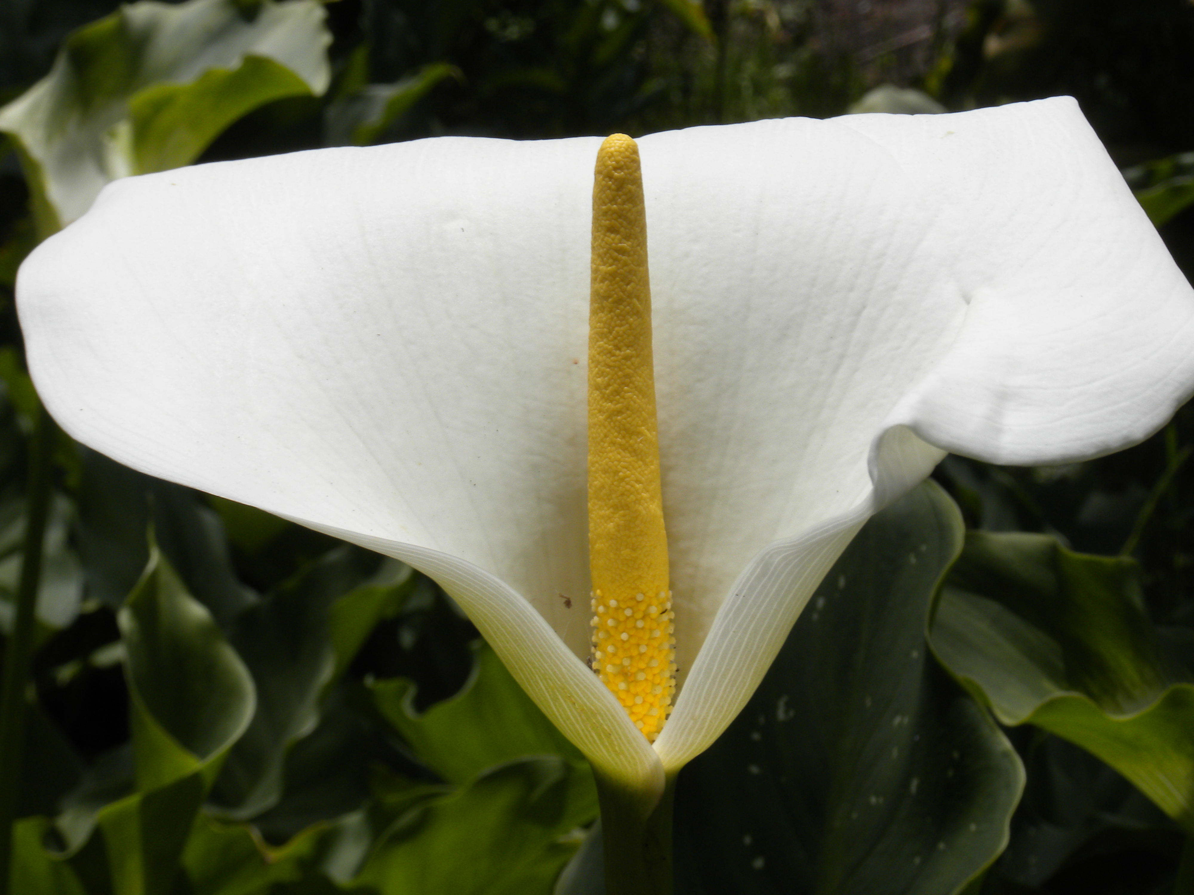 White_and_yellow_flower.JPG (4000×3000)