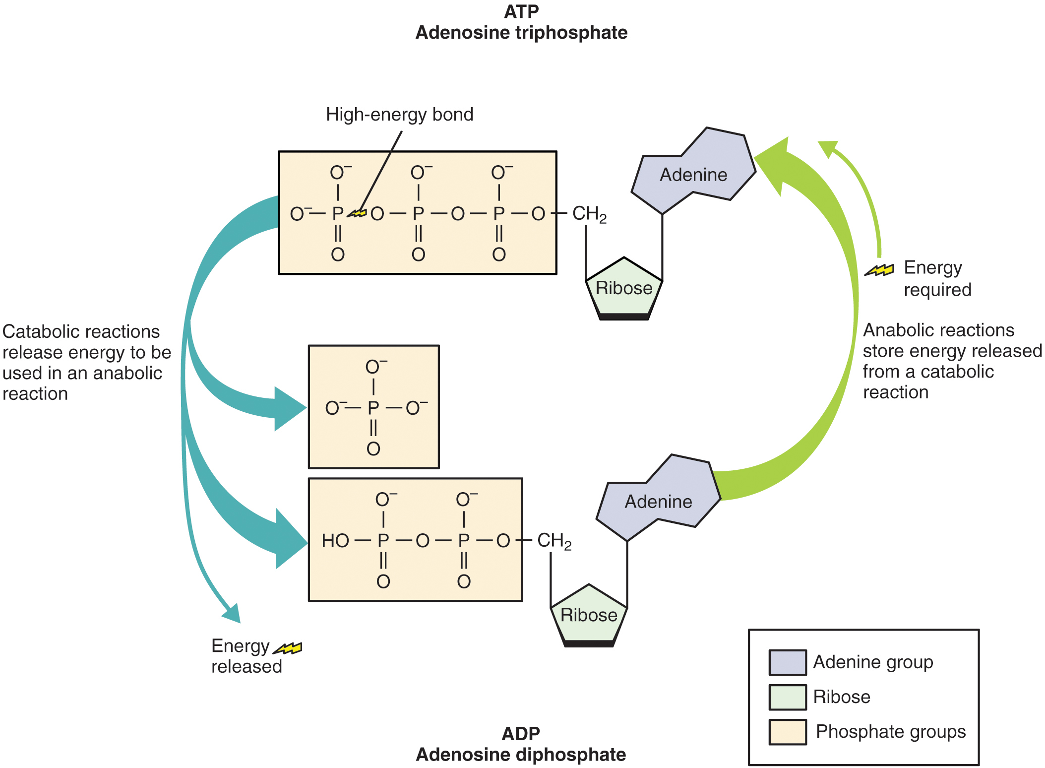 File The Structure Of Atp Molecules