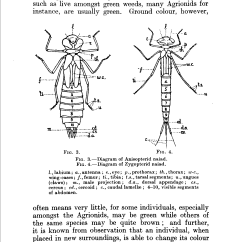 Dragonflies Eye Diagram Warn Winch Remote Wiring 3 Wire File Lucas Naiad Stage Of Page020 Png Wikimedia Commons