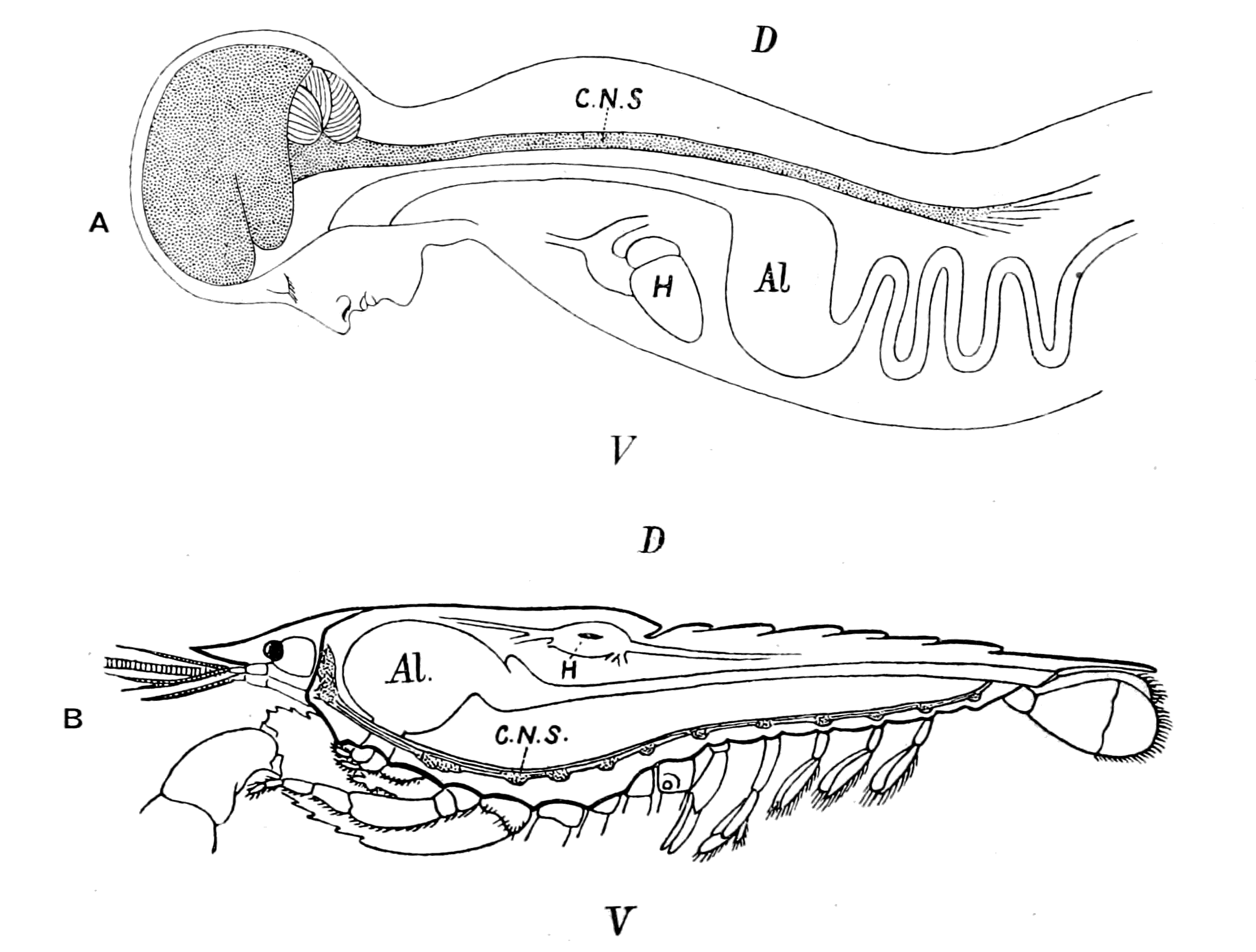 File Origin Of Vertebrates Fig 001