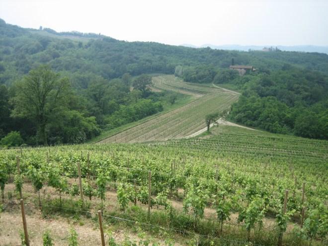 Wine-Country-Friuli-Giulia-Italy
