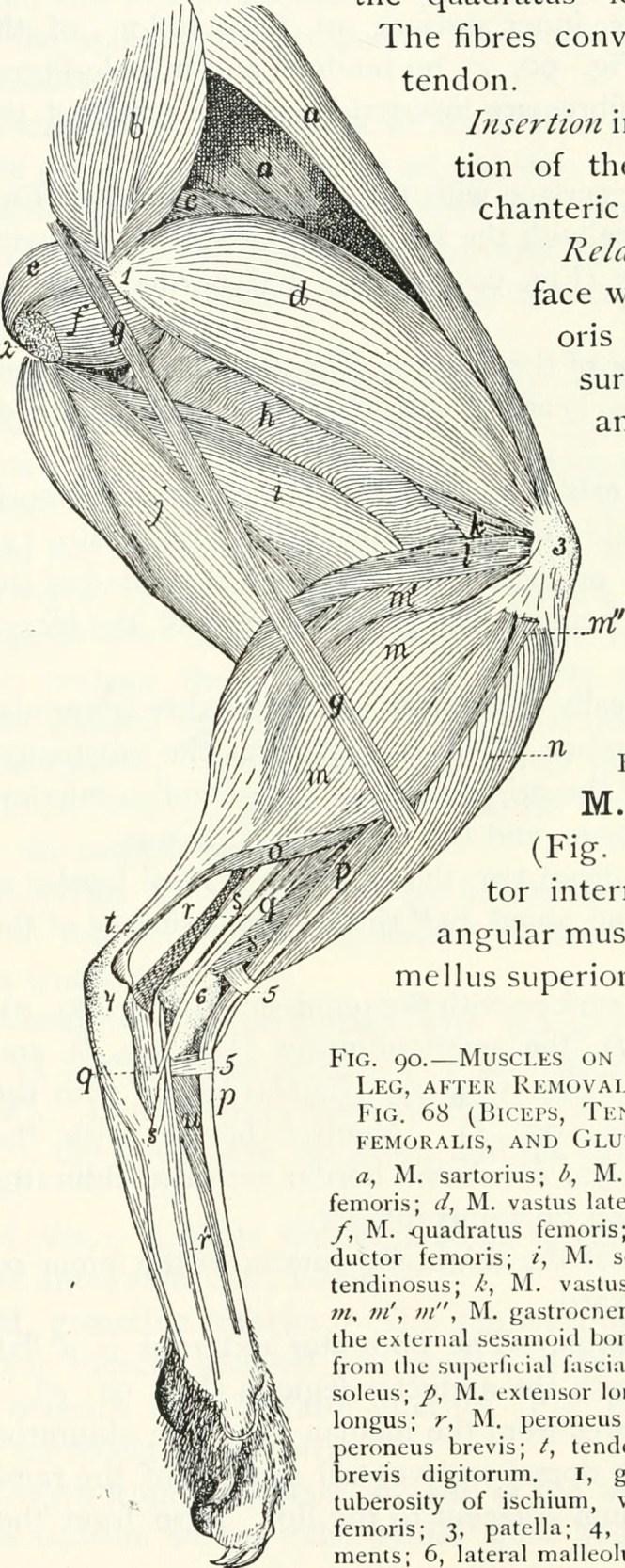 Cat Muscular Anatomy Images - human body anatomy