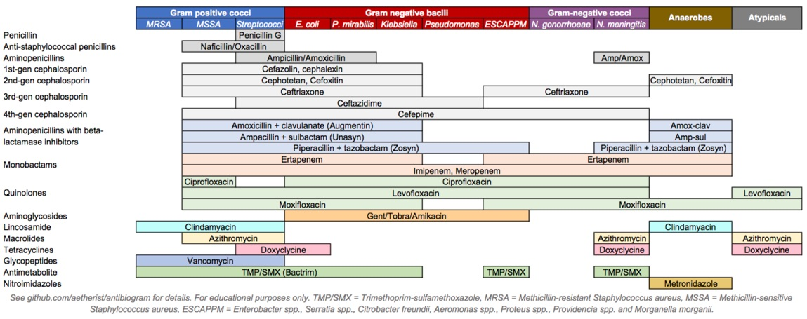 hight resolution of simplified diagram showing common disease causing bacteria and the antibiotics which act against them