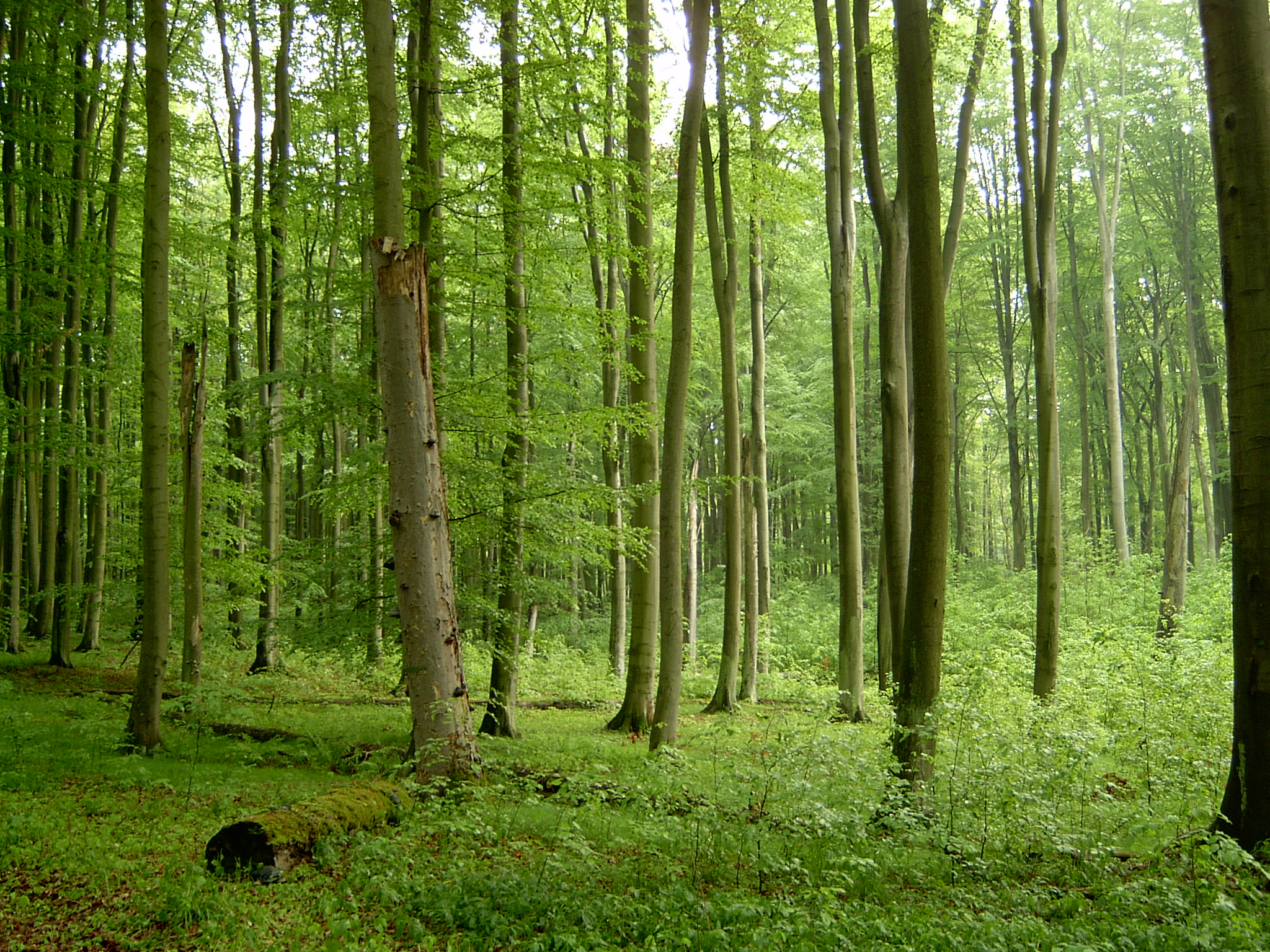 Reserve Forest