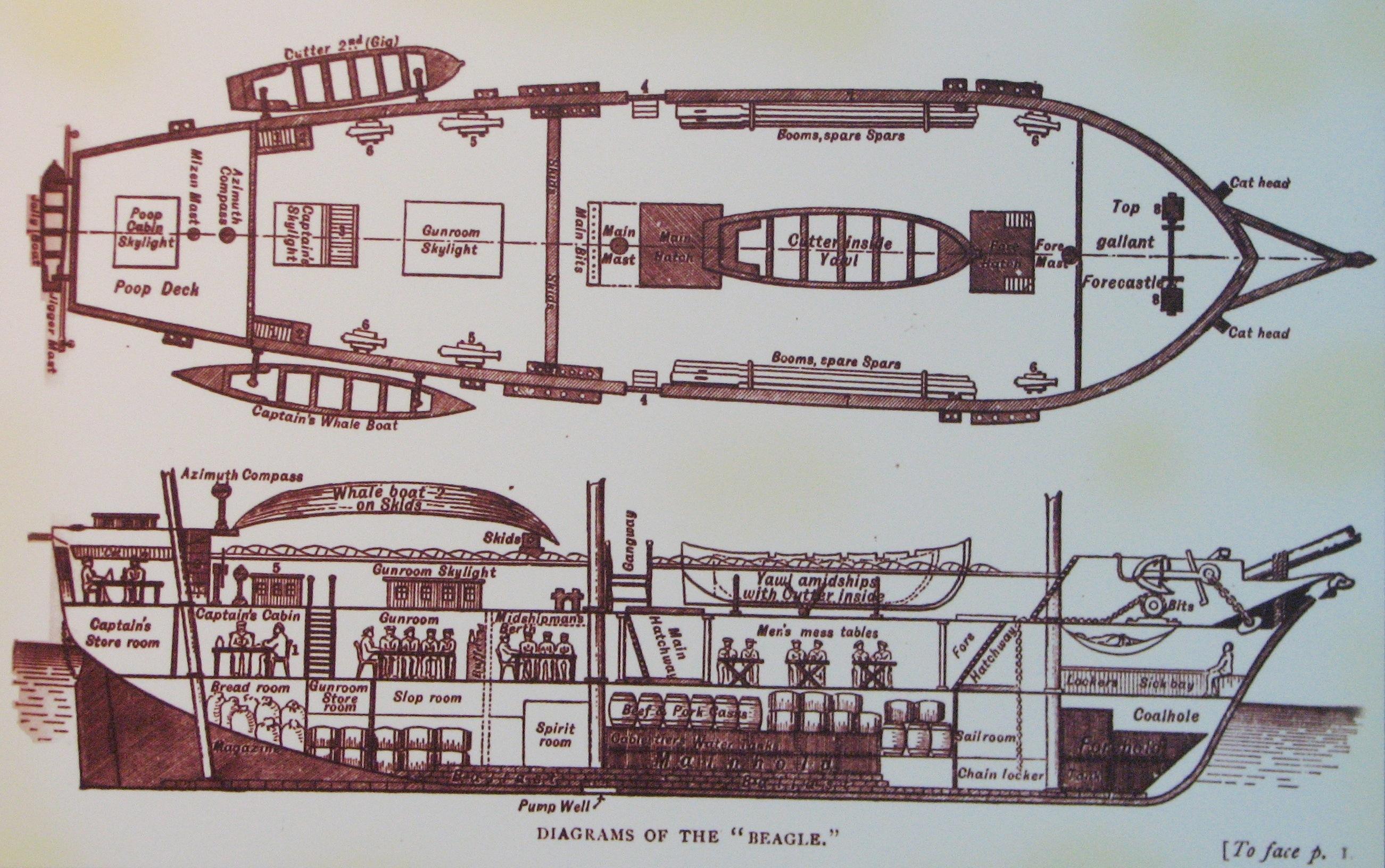 inside the titanic diagram trailer wiring 7 way file hms beagle diagrams jpg wikimedia commons