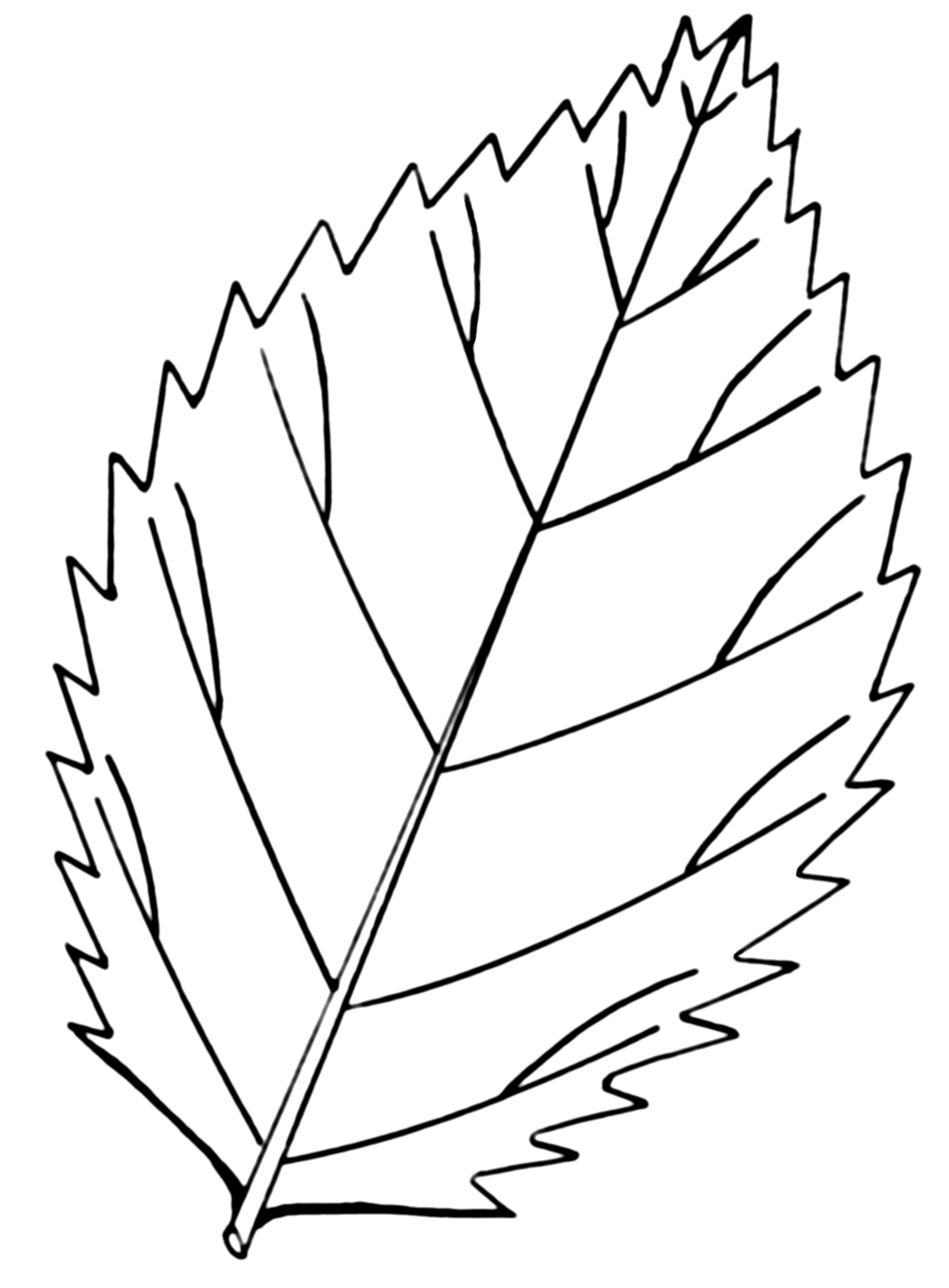 fern simple diagram single phase ac motor starter wiring file serrated leaf psf png wikimedia commons