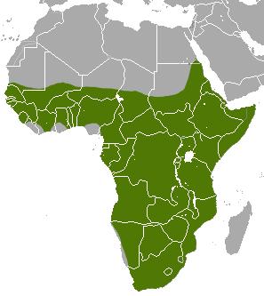 English: Aardvark (Orycteropus afer) range