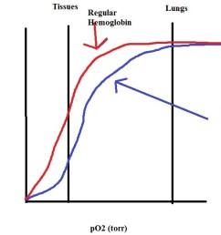 bpg bound hemoglobin jpg [ 914 x 937 Pixel ]
