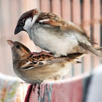 A concern towards Nature: Save Sparrows (On World Sparrow Day, 20th March)