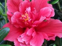 File Italy-taormina-macro Flower - Creative Commons
