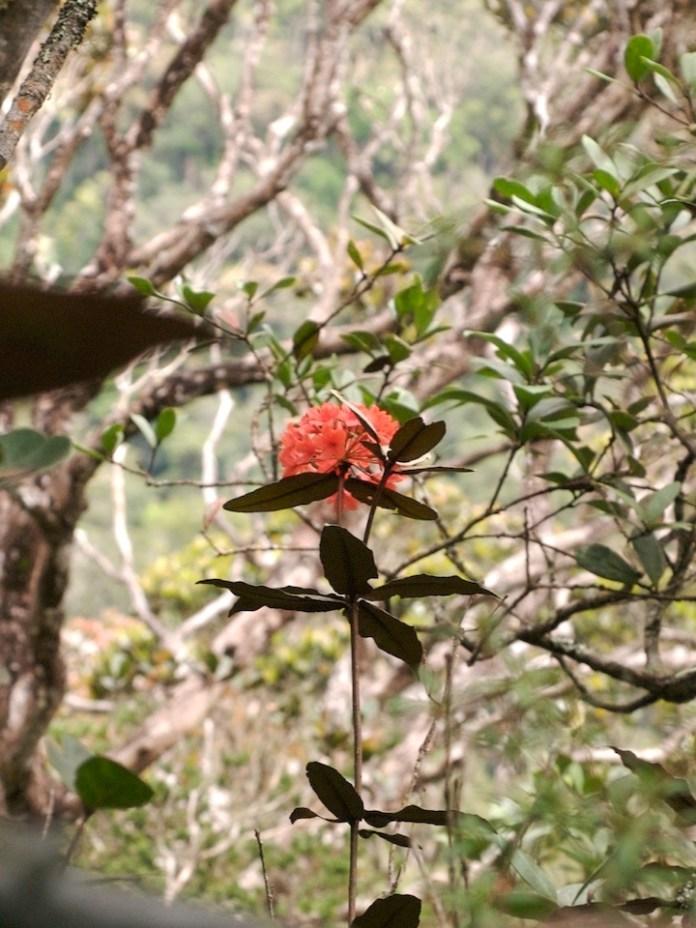 Termotrophisme pada tumbuhan