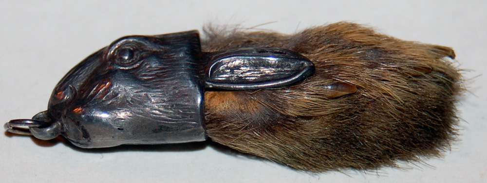 https://i0.wp.com/upload.wikimedia.org/wikipedia/commons/1/12/Rabbitsfoot.jpg