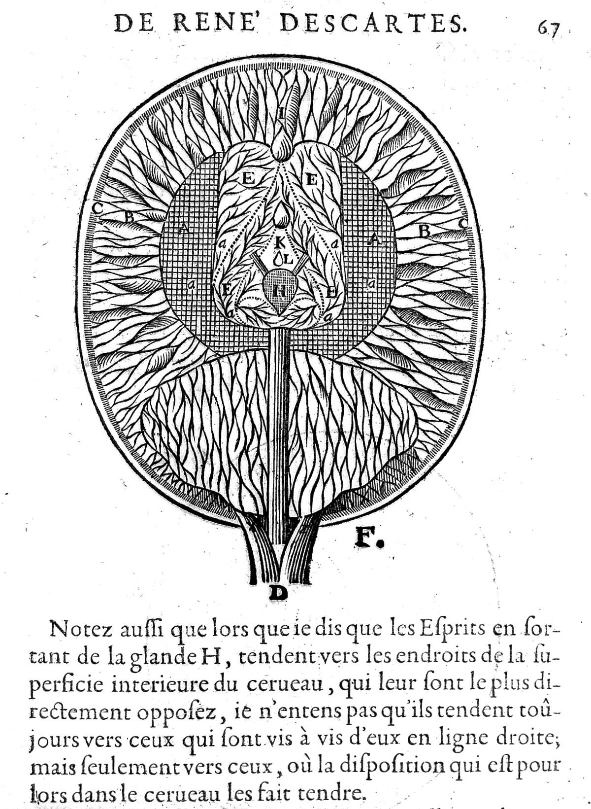Description Of Brain