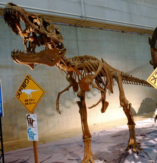 https://i0.wp.com/upload.wikimedia.org/wikipedia/commons/1/13/Lythronax_skeleton.jpg?resize=500%2C521&ssl=1