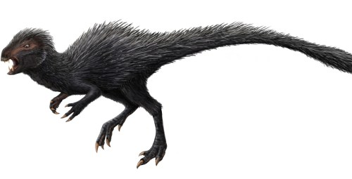 https://i0.wp.com/upload.wikimedia.org/wikipedia/commons/1/14/Heterodontosaurus_restoration.jpg?resize=500%2C255&ssl=1