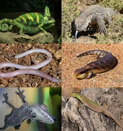 science diagram of lizard [ 3988 x 3988 Pixel ]