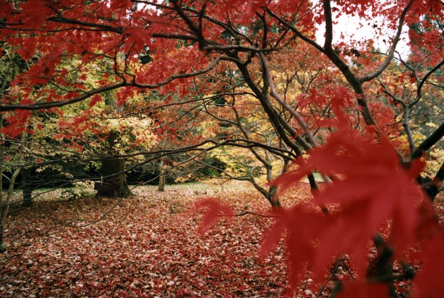 Fall Wallpaper Road Westonbirt Arboretum Wikipedia