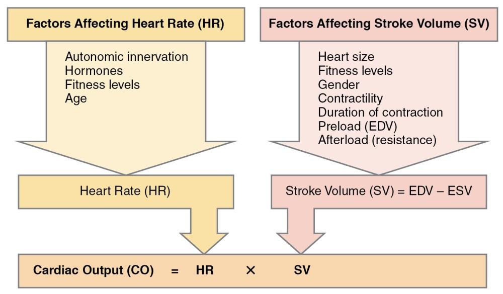 medium resolution of blood pressure diagram of correct posture